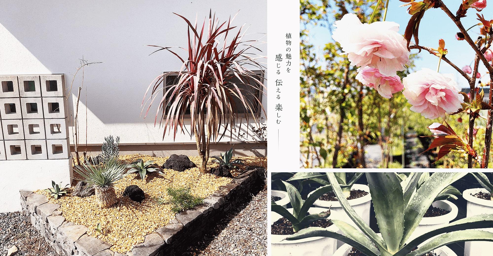 植物の魅力を 感じる 伝える 楽しむ――